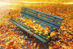 Vacant park bench in autumn Royalty Free Stock Image