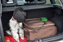 Vacanza con il cane fotografia stock libera da diritti