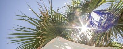 Vacanza sotto le palme fotografia stock