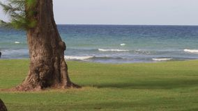 Vacanza tropicale delle onde di mar dei Caraibi video d archivio