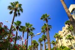 Vacanza, viaggio e turismo Tronchi e corone delle palme alte nel cielo blu Natura tropicale nella località di soggiorno del mare immagine stock