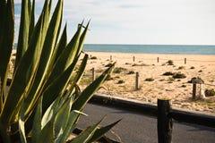 Vacanze estive di spesa in bella spiaggia sabbiosa del Portogallo del sud Fotografie Stock Libere da Diritti