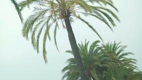 Vacanze estive a stazione turistica, vista sulle belle palme dall'automobile commovente video d archivio