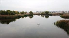 Vacaresti Naturalna rezerwa zdjęcie wideo