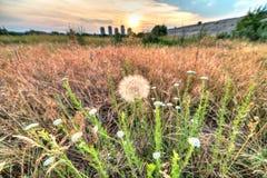 Vacaresti-Naturpark Lizenzfreie Stockfotos