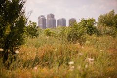 The Vacaresti wetlands. In Bucharest, Romania, with skyscrapers in the background royalty free stock image