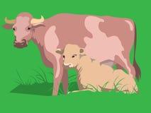 Vacas ilustração stock