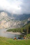 Vacas al lado del lago de la montaña Imagenes de archivo