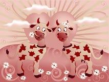 Vacas cariñosas de la tarjeta del día de San Valentín divertida en la puesta del sol Imagen de archivo