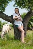 Vacas cercanas cansadas que se sientan de la mujer joven en campo Foto de archivo