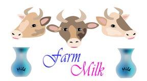Vacas con los jarros de leche Imagenes de archivo