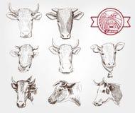 Vacas da criação de animais Fotografia de Stock Royalty Free