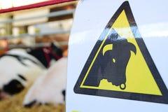 Vacas de advertência na estrada, próxima, na pena Imagens de Stock