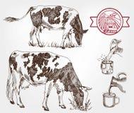 Vacas de la cría ilustración del vector