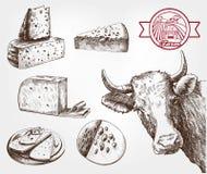Vacas de la cría Fotografía de archivo