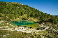 Vacas de la montaña del pastor y del suizo en el lago azul en Sunny Mor imagen de archivo