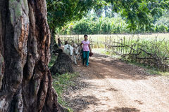 Vacas de la vaquera de la muchacha Estrecho en los lados de las barras Fotos de archivo