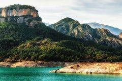 Vacas de relaxamento com as montanhas no fundo Imagens de Stock Royalty Free