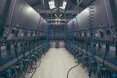 Vacas del ordeño mecánico usando las ordeñadoras en la granja Fotografía de archivo