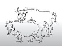 Vacas desenhadas mão Imagem de Stock Royalty Free