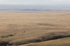 Vacas distantes que pastam a terra imensa do rancho Fotos de Stock