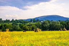 Vacas e montanhas Imagens de Stock