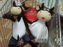 Vacas en cesta Imagen de archivo libre de regalías