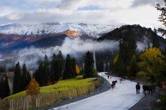 Vacas en el camino de la montaña Foto de archivo libre de regalías