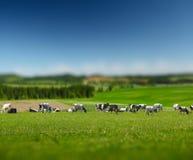 Vacas en el campo Imagen de archivo