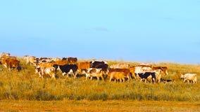 Vacas en el campo metrajes