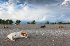 Vacas en la playa Foto de archivo libre de regalías