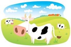 Vacas en prado Foto de archivo libre de regalías
