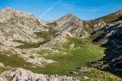 Vacas en ruinas del pueblo en Picos de Europa Foto de archivo libre de regalías