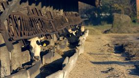 Vacas en una ganader?a