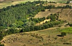 Vacas en valle Imagen de archivo