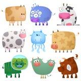 Vacas engraçadas Fotos de Stock