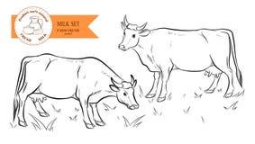 vacas Esboço desenhado mão Ilustração do vetor Fotografia de Stock