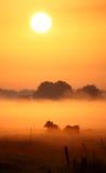 Vacas holandesas en niebla de la mañana Imagen de archivo libre de regalías