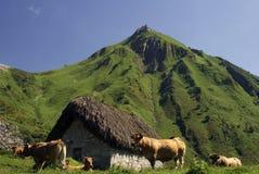 vacas monta la en Стоковое Изображение