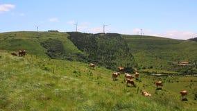 Vacas na planta de energias eólicas o fundo em Portugal video estoque