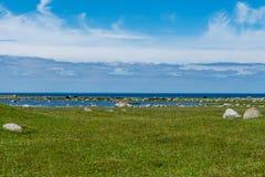 Vacas negras y marrones que pastan en un campo verde por el océano Fotos de archivo