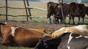 Vacas no cerco video estoque