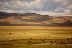 Vacas no prado Imagem de Stock