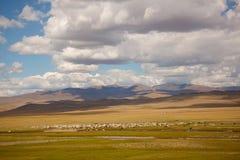 Vacas no prado Imagem de Stock Royalty Free