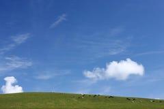 Vacas no prado verde de encontro a um céu azul. fotos de stock