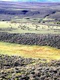 Vacas oídas hablar y ganado que pastan en las cuestas más bajas de la roca Foto de archivo libre de regalías
