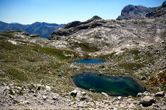 Vacas perto do lago alto nas montanhas, Los Picos de Europa fotos de stock royalty free