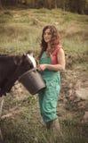 Vacas que introducen del granjero Foto de archivo