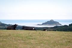 Vacas que pasan por alto el soporte del St Michael's fotos de archivo