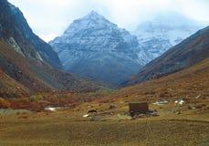 Vacas que pastam em um fundo das montanhas Fotografia de Stock Royalty Free
